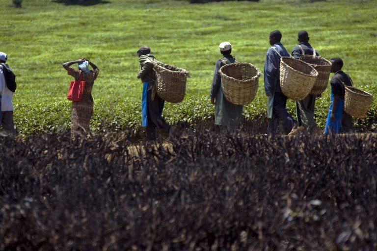 Workers at a tea farm in western Kenya carry their baskets past a tea field set alight during ethnic clashes in February 2008. Photo: AFP/Yasuyoshi Chiba