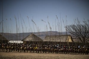 Young Zulu women carry ceremonial reeds in September 2014 during the annual reed dance ceremony (uMkhosi woMhlanga) that celebrates their virginity. Photo: AFP/MARCO LONGARI