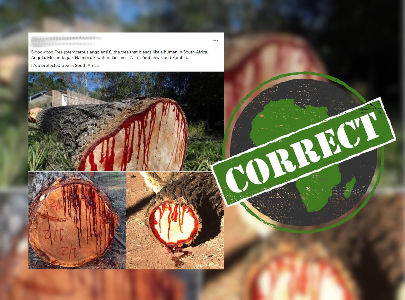 Bloodwood_Correct