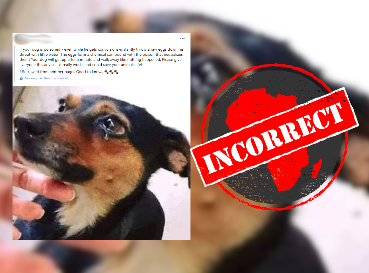 Dog_Incorrect