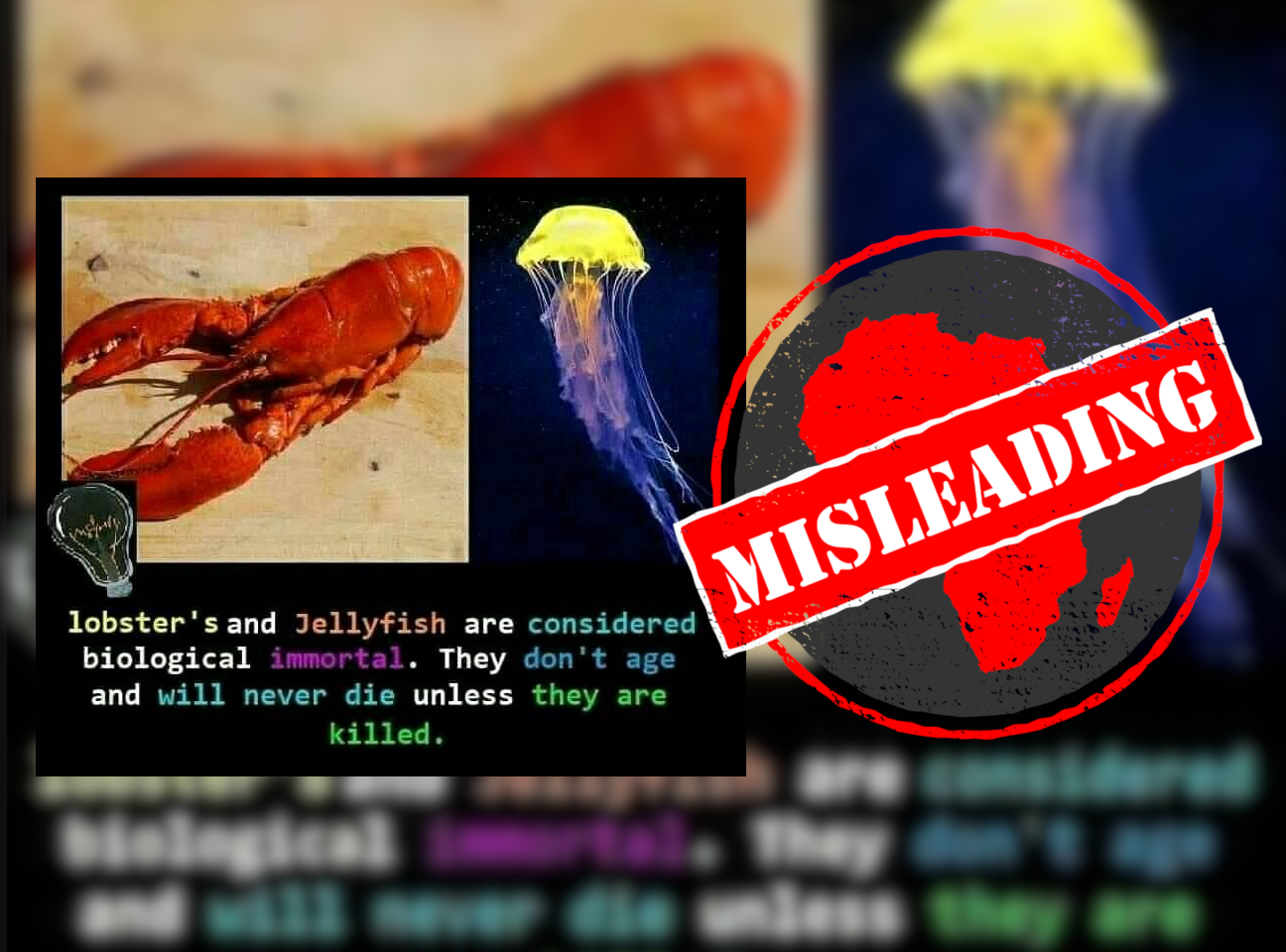 Lobsterjellyfish_Misleading