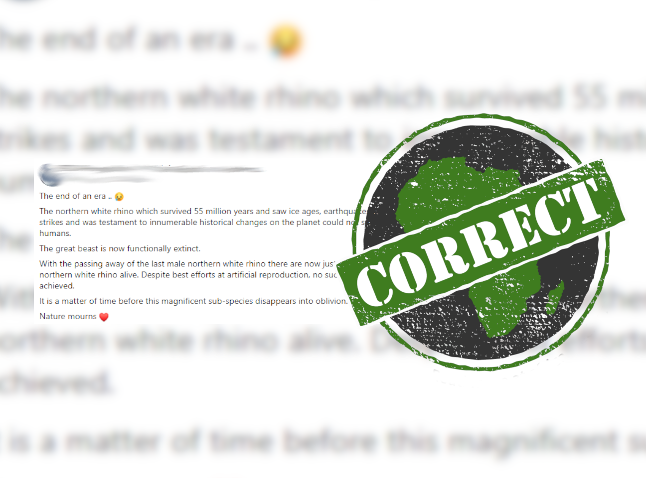 Rhino_Correct