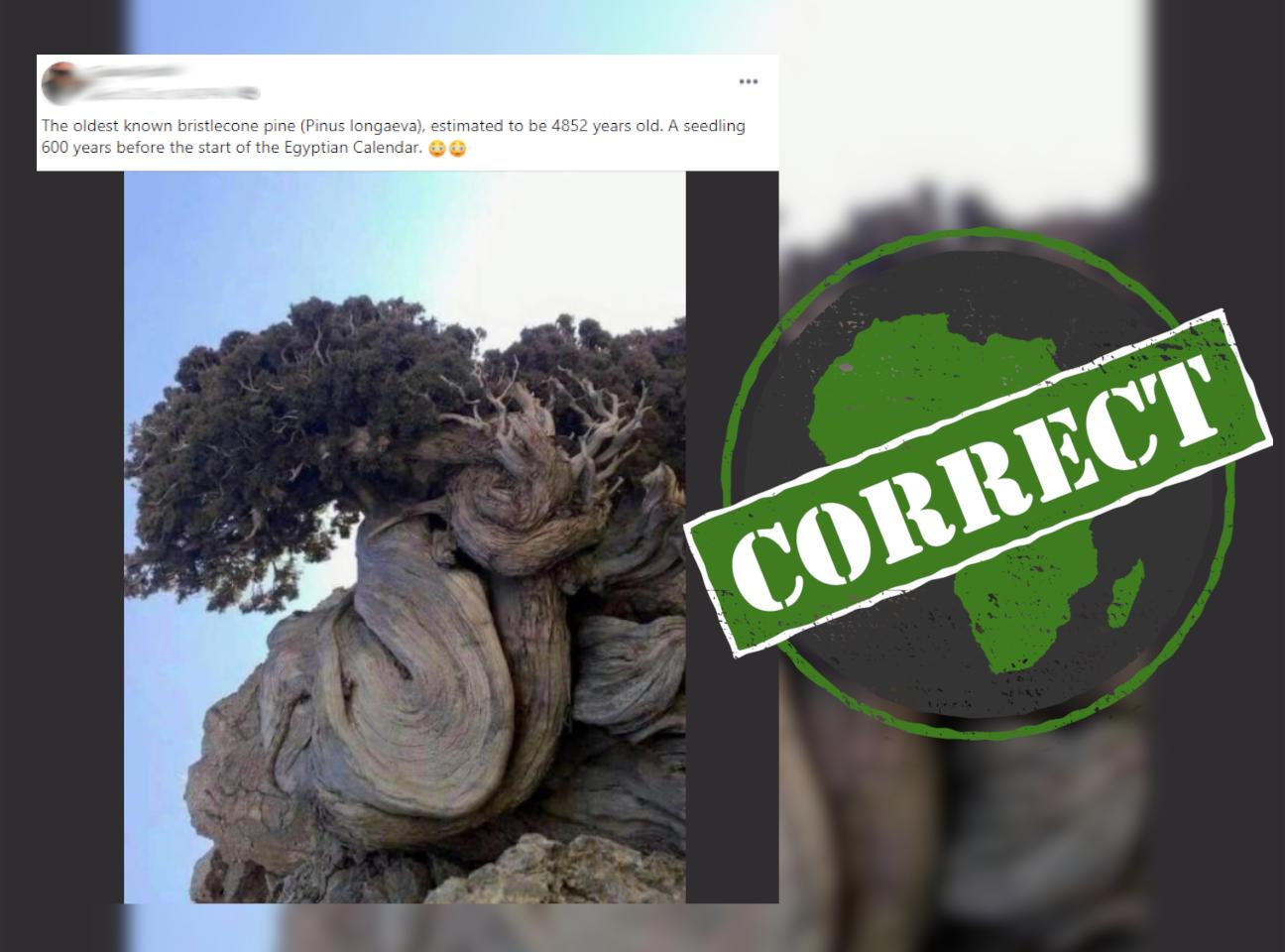 Tree_Correct
