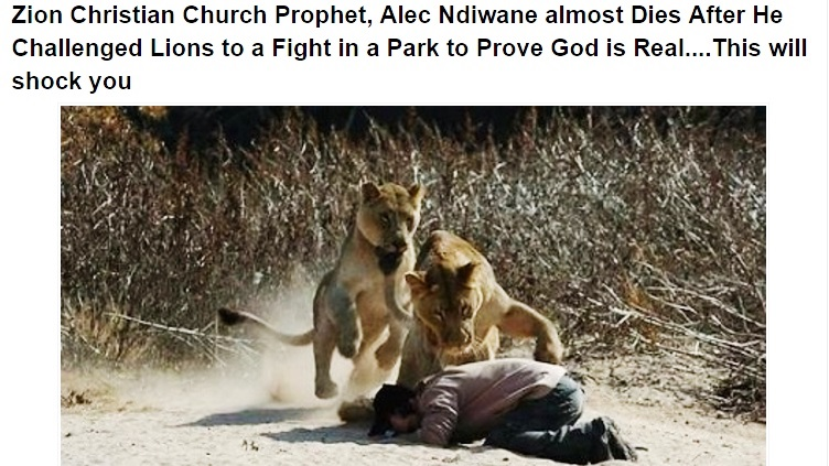 Kevin Richardson walking with a lion. Photo: Kevin Richardson