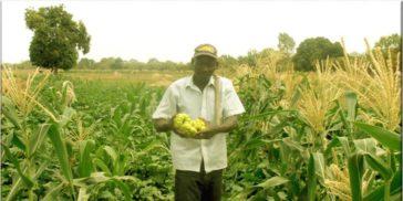 L'agriculture génère des emplois et de la nourriture. Photo ROPPA